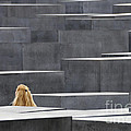 Berlin Germany Holocaust Memorial by Matthias Hauser