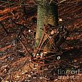 Bicycle abandoned in a forest Print by BERNARD JAUBERT