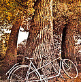 Bicycle Built For Two by Debra and Dave Vanderlaan