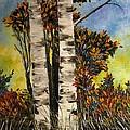 Birches for my friend