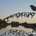 Bird Song at Last Light Print by David Gordon