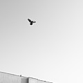 Birds Flying In The Sky by Tontygammy + Images
