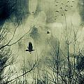 Birds In Flight Against A Dark Sky by Sandra Cunningham