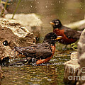 Birds Of A Feather Swim Together by Inspired Nature Photography Fine Art Photography