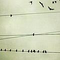 Birds On Telephone Wire by Lucy Loomis, Photographer