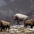 Bison King Print by Daniel Eskridge