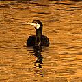 Black Bird On Surise by Radoslav Nedelchev