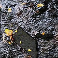 Black Rock At Graue Mill by Todd Sherlock