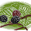 Blackberries, Woodcut by Gary Hincks