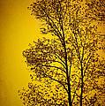 Blazing Sunset by Cheryl Davis