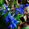 Blue Manipulation by David Lane
