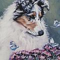 Blue Merle Collie Pup Print by Lee Ann Shepard