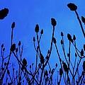 Blue Morning by Todd Sherlock
