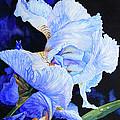 Blue Summer Iris Print by Hanne Lore Koehler