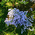 Blue Wild Flowers by Mindy Newman