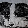 Borden Collie Pup by Joan Pye