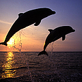 Bottlenose Dolphins by Francois Gohier and Photo Researchers