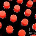 Bottles Red Caps by Sami Sarkis