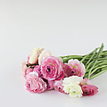 Bouquet Of Ranunculus by Elin Enger