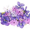 Bouquet Of Spring Flowers by Elena Elisseeva