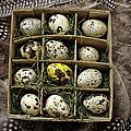 Box Of Quail Eggs by Garry Gay
