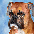 Boxer by Cherilynn Wood