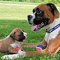Boxer Mommy And Pup by Renae Laughner