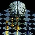 Brainpower by Laguna Design