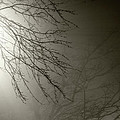 Branches In The Fog by Susan Isakson