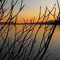Branches In The Sunset by Joana Kruse