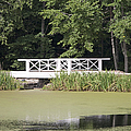 Bridge Over An Algae Covered Pond by Jaak Nilson