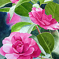 Bright Rose-colored Camellias by Sharon Freeman