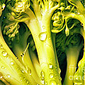 Broccoli Scape I Print by Nancy Mueller