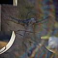 Broken Head Cross by Susan Isakson