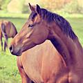 Brown Horse by Euge de la Peña