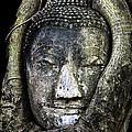Buddha Head in Banyan Tree Print by Adrian Evans