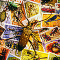 Bugs On Postage Stamps by Garry Gay