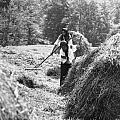Building haystacks
