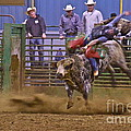 Bull Rider 1 by Sean Griffin