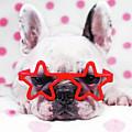 Bulldog With Star Glasses by Retales Botijero