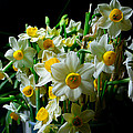 Bunch Of Fresh Narcissus In A Glass Vase Print by Lanjee Chee