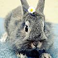 Bunny by Falko Follert