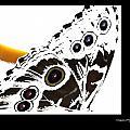 Butterfly Dream by Xoanxo Cespon