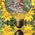 Butterfly In A Bulb II Print by Shane Bechler