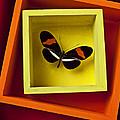 Butterfly In Box by Garry Gay