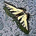 Butterfly In Rain by Susan Leggett