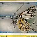 Butterflycomp 1991 B by Glenn Bautista