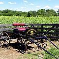 Buttonwood Farm Ct Usa by Kim Galluzzo Wozniak