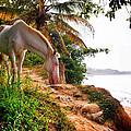 Caballo Blanco by Skip Hunt