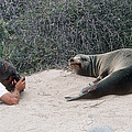 Californian Sea Lion With A Tourist by Georgette Douwma